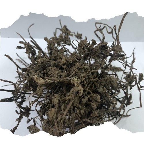 Grass jelly leaves Mesona Chinensis / low price from Vietnam - Nick +84773993109