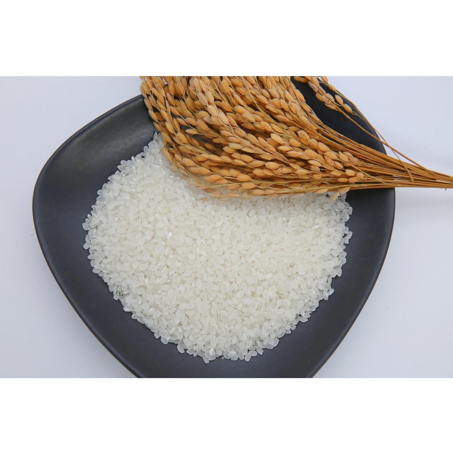 Well milled 24 Months Current Year JAPONICA RICE (SHORT-GRAIN) White Rice From Viet Nam