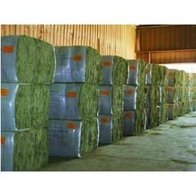 Super Top Quality Alfafa Hay for Animal Feeding Stuff Alfalfa / Timothy / Alfalfa Hay for Sale***..