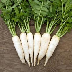 Best Grade Wholesale Fresh Radish