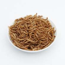 Freeze dried meal-worms at lowest prices