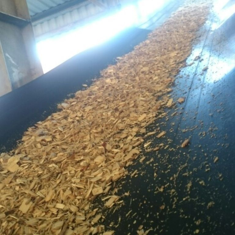 Pine wood chips/ Eucalyptus pulp wood chip