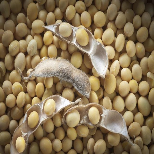 TOP CHOICE SOYBEANS CHEAP PRICE SOYA BEANS BEST SELLING SOY BEAN SEEDS