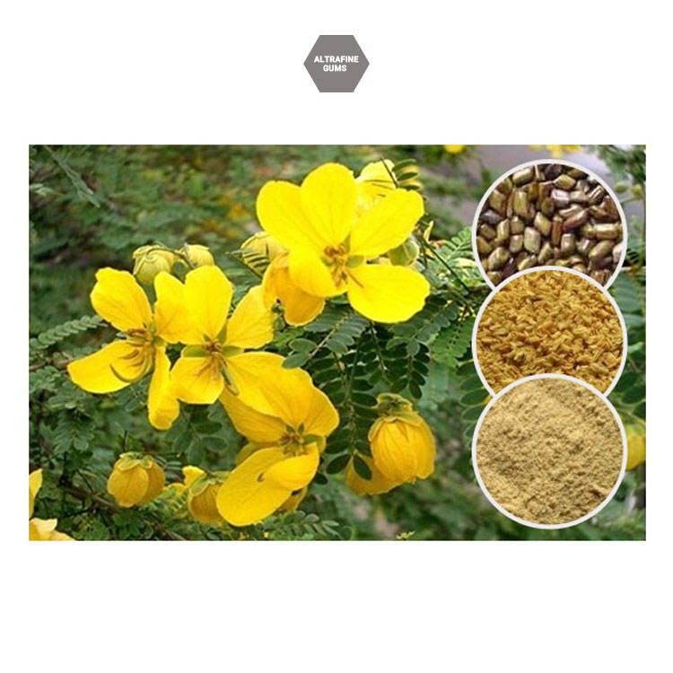 Effective in Weight Loss Health Beneficial Cassia Gum Obtained from Cassia Tora Seeds Powder