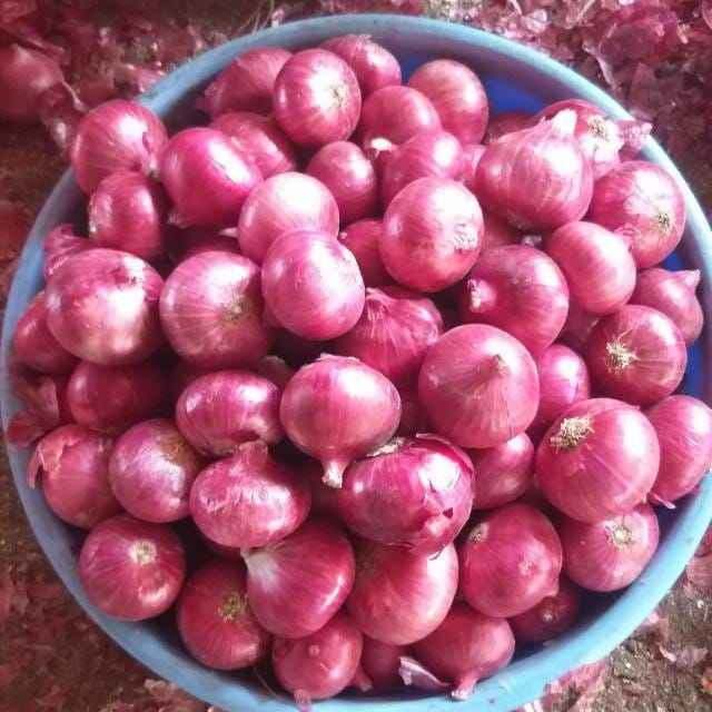 Fresh Onion Red onion / Gold onion High quality best price