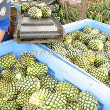 Fresh quality Pineapples