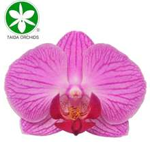 flower orchid plants for wholesale buyers