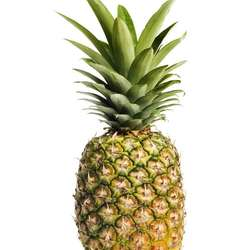 Wholesale Fresh Pineapple Price / Bulk Fresh Fruit Pineapple/Queen Pineapple +91-9891317790