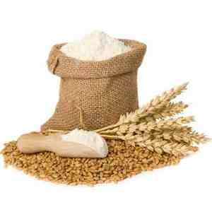 Quality Wheat Seeds/Wheat Flour/ Wheat Grain