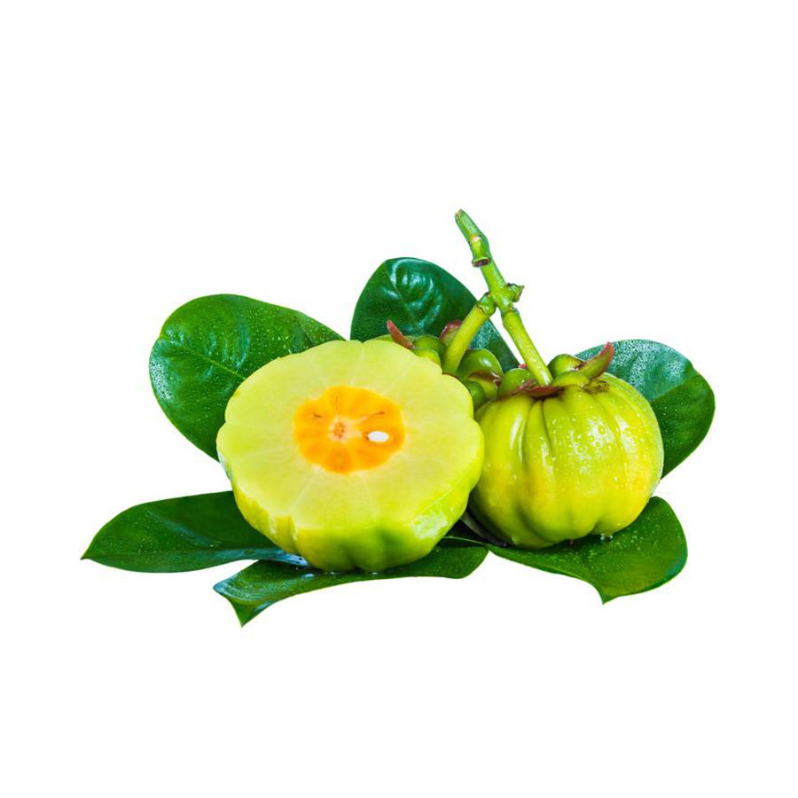 High Quality Garcinia Cambogia 50% HCA Extract For Weight Loss