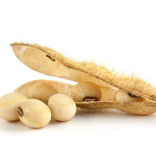 Hot Sale High Quality Soybean Seed