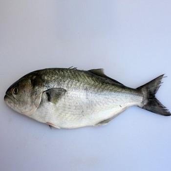 High Quality Frozen Blue Fish For Sale