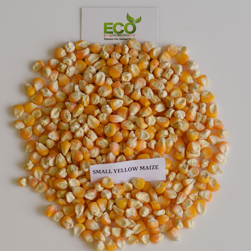 White / Yellow Maize from India
