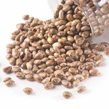 Castor Seeds High sprouting herb raw castor bean plant seeds Bulk Wholesale price oil seeds