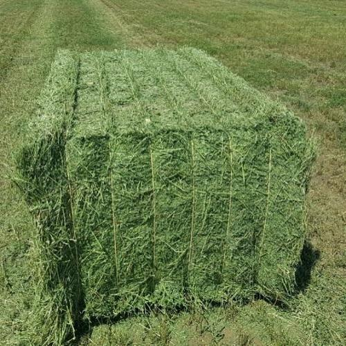 Quality Alfalfa Hay for Animal Feeding and Seeds Cheap Alfalfa Hay Bales