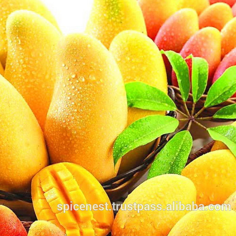 Mango Puree/ Pulp/ Juice High Quality Exporter From Inddia