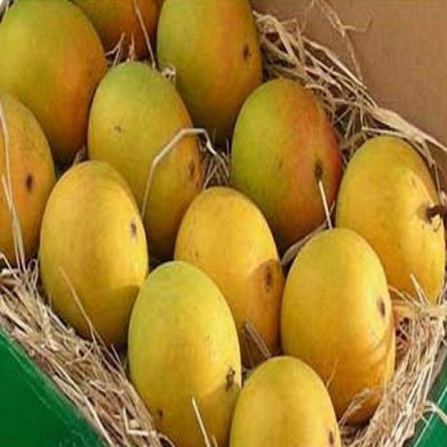 Fresh Alphonso Mangoes Exporters now