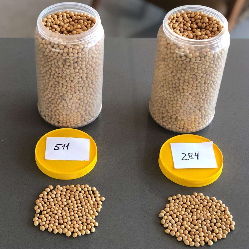 Non Gmo Soybean (Food Type)