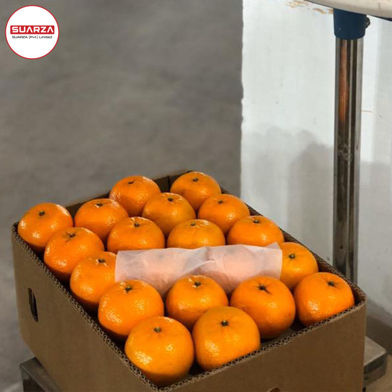 Fresh sweet Mandarin (Fremont), Fresh Style Mandarin oranges/fresh mandarin orange/Citrus