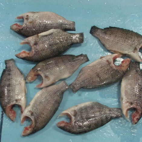 Buy Fresh Frozen Red Tilapia Fish From THAI VENTURE FARMS