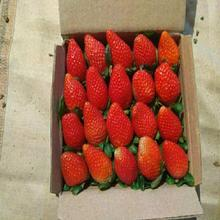Sale Price For Korea Fresh Strawberry
