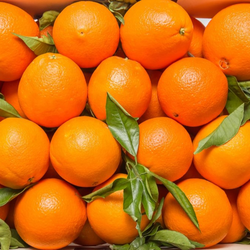 Fresh Orange - Finest quality - Egyptian