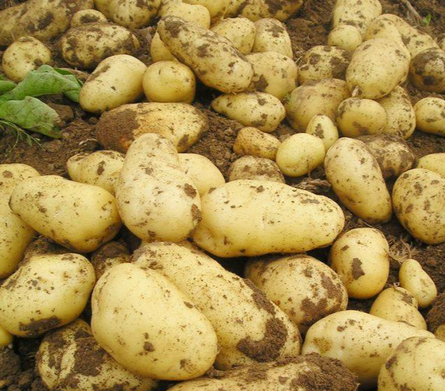 New crop Fresh Sweet potato, Irish Potato, Potatoes for sale