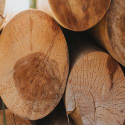 Best  Pine round logs / pine wood / Pine wood price
