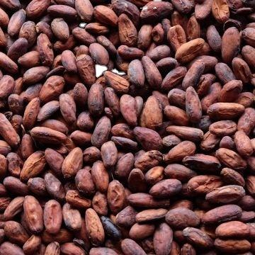 Organic Roasted Cacao Beans