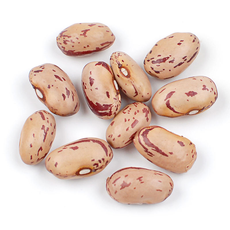 US Grown Brown Beans Fresh Pinto Beans Robinson Fresh MOQ 50 LBS Quick Delivery in US
