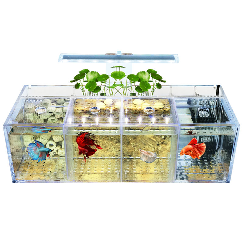 Betta fish tank guppy breeding and hatching isolation box acrylic special group row tank live desktop ecological creativity