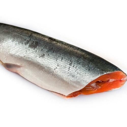 Fresh Frozen Chum Salmon Fillet Fish