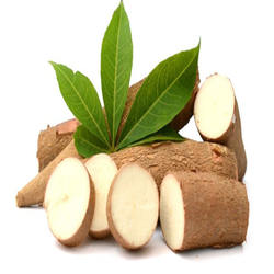 TOP GRADE INDONESIA CASSAVA FRESH AND ORGANIC FROM ROOT FOR QUALITY EXPORT