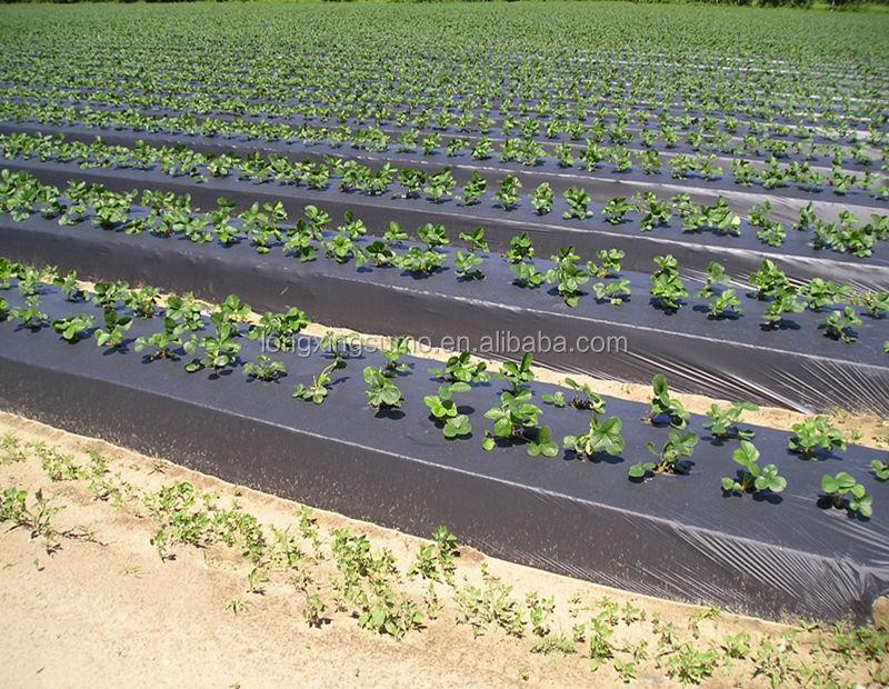 <span class=keywords><strong>20</strong></span> <span class=keywords><strong>hojas</strong></span> plásticas del mantillo del PE agrícola plateado y negro del micrón para el crecimiento de la hierba de la prevención