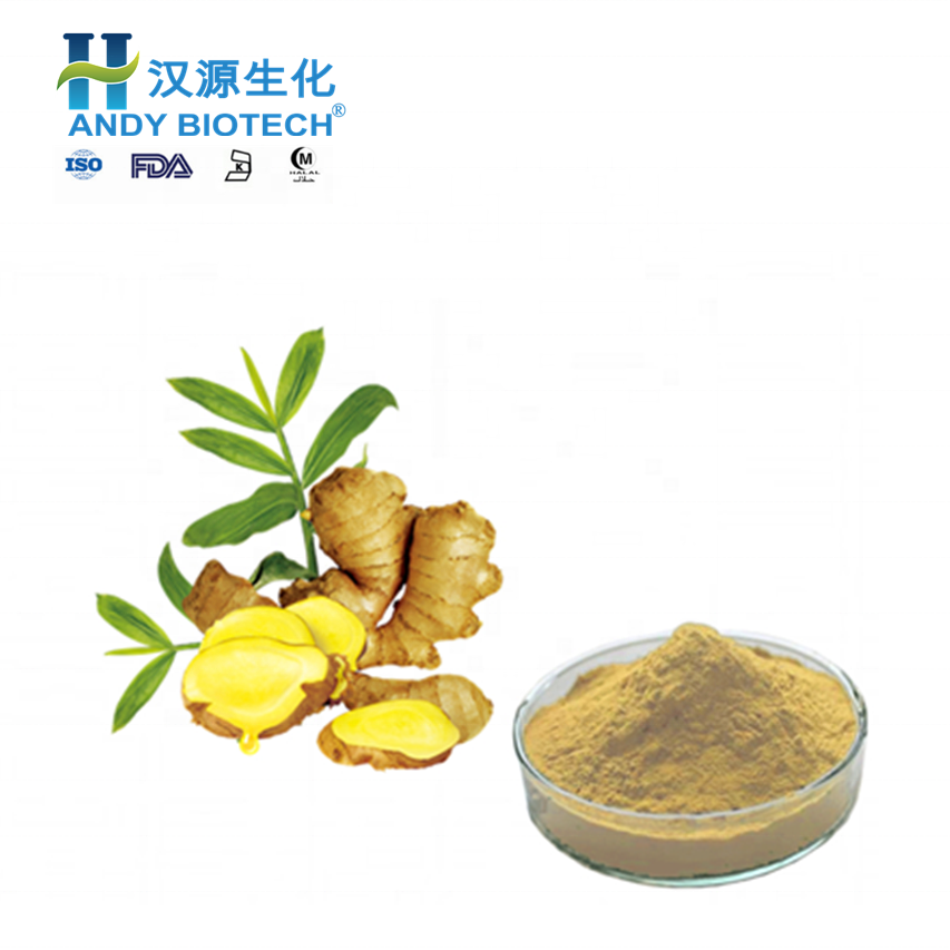 Wholesale best quality bulk fresh ginger for importers top selling