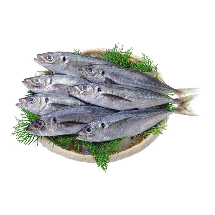 Hot sale sliced seafood fish horse mackerel sashimi in Japan
