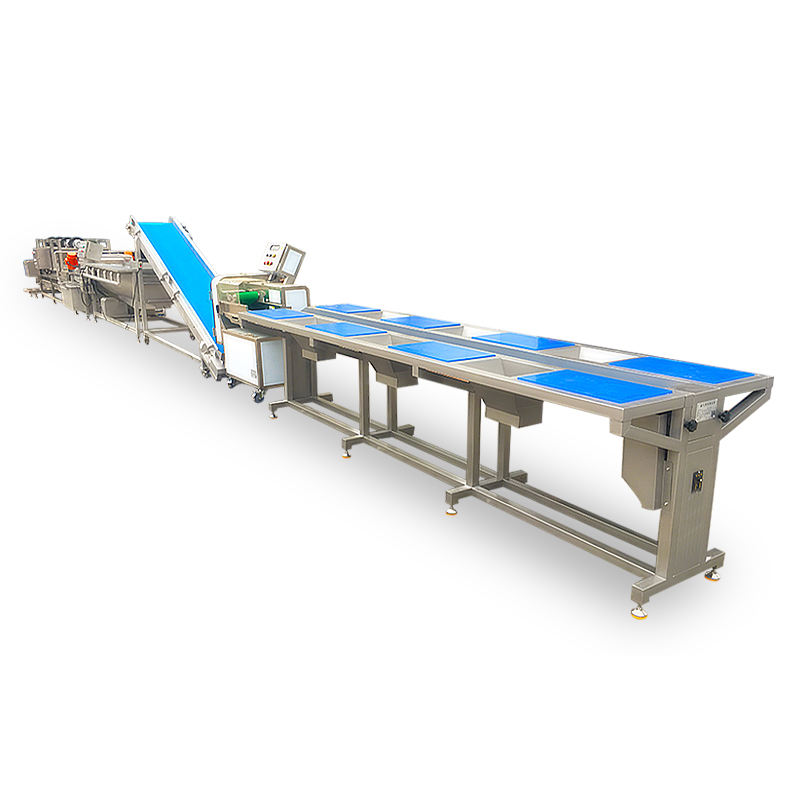 Factory Supply Bubble Washer Machine for Fruits and Salad Leaf Vegetables Processing Production Line