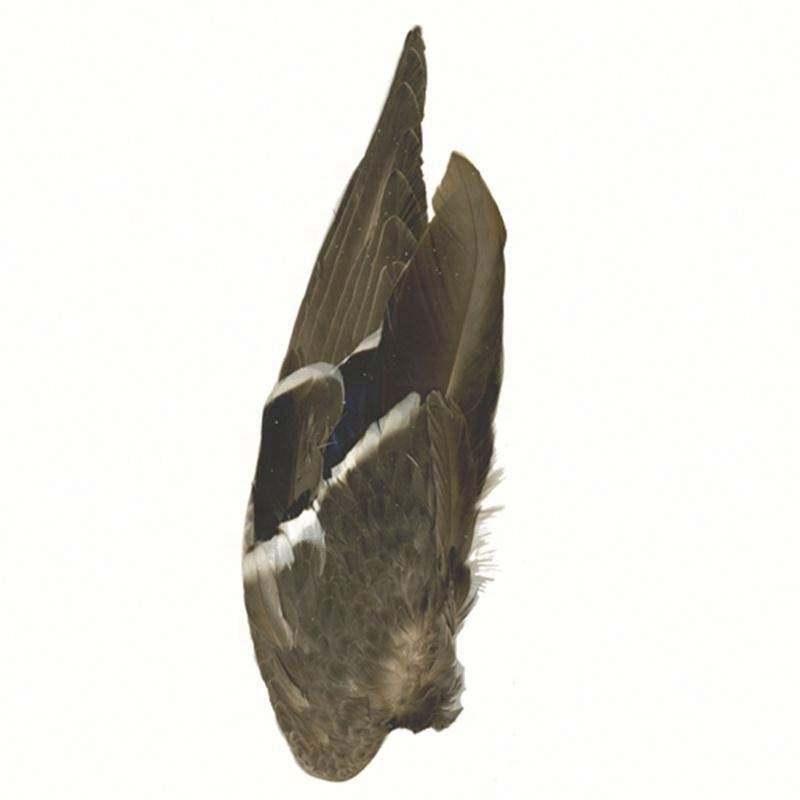 Naturel <span class=keywords><strong>Ailes</strong></span> De Canard Colvert, plumes de Canard pour la décoration