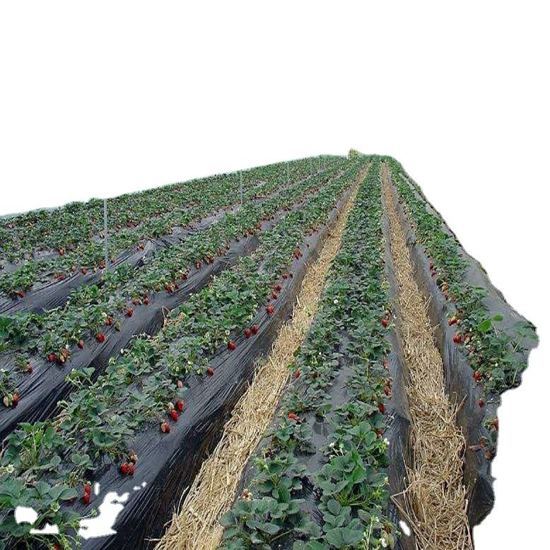 Low price high quality greenhouse strawberry with Hydroponic Growing System