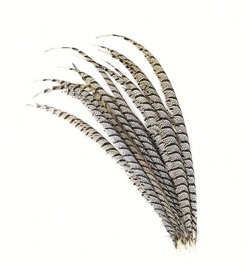 40-45 pouces De Haute Qualité Moins Cher Dame Amherst faisan queue Plume avec Le Prix Concurrentiel
