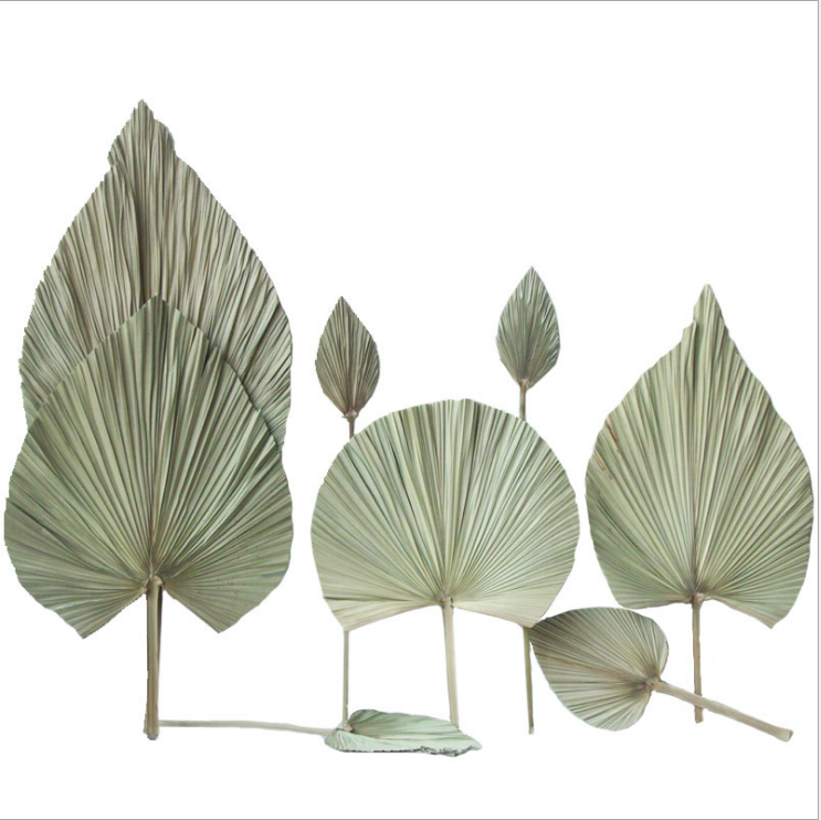 Wedding Home Fall Decor Flora Natural Real Large Sun Palm Front Spears Preserved Dried Palm Leaves
