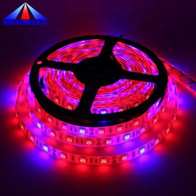 LED grow 스트립 5050smd 660nm 440nm 4:1 ratio 60 의 led 당 meter red & blue led tape 빛