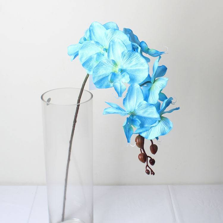 Trung Quốc hoa phong lan, nhân tạo phong lan cây vườn ươm