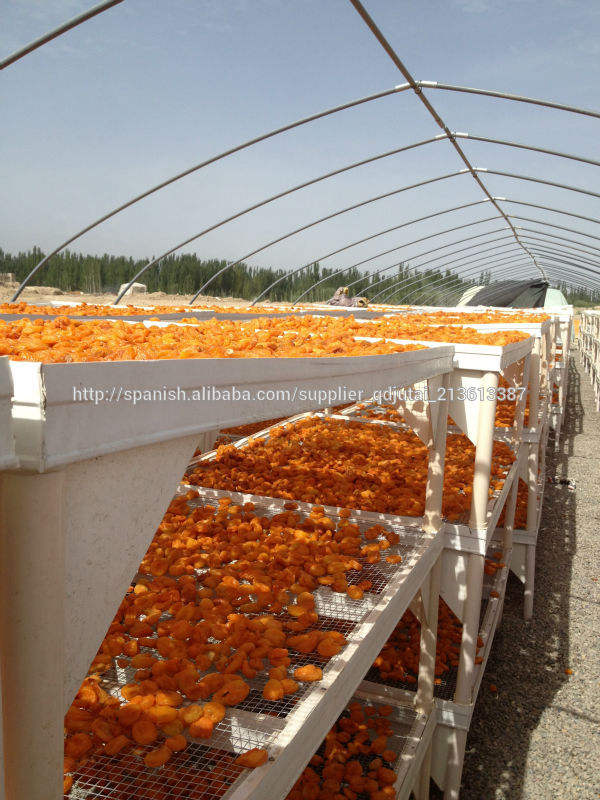 Lo más mejor posible venta de los albaricoques secados