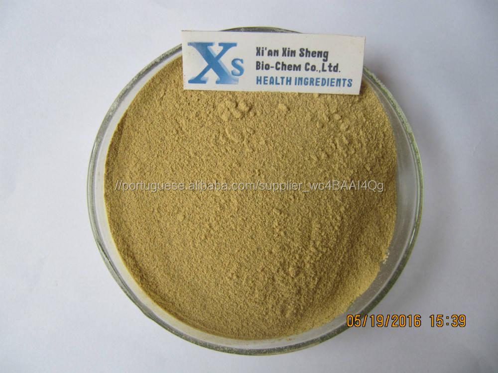 Gmp Kosher Natural Panax Notoginseng extrato de raiz