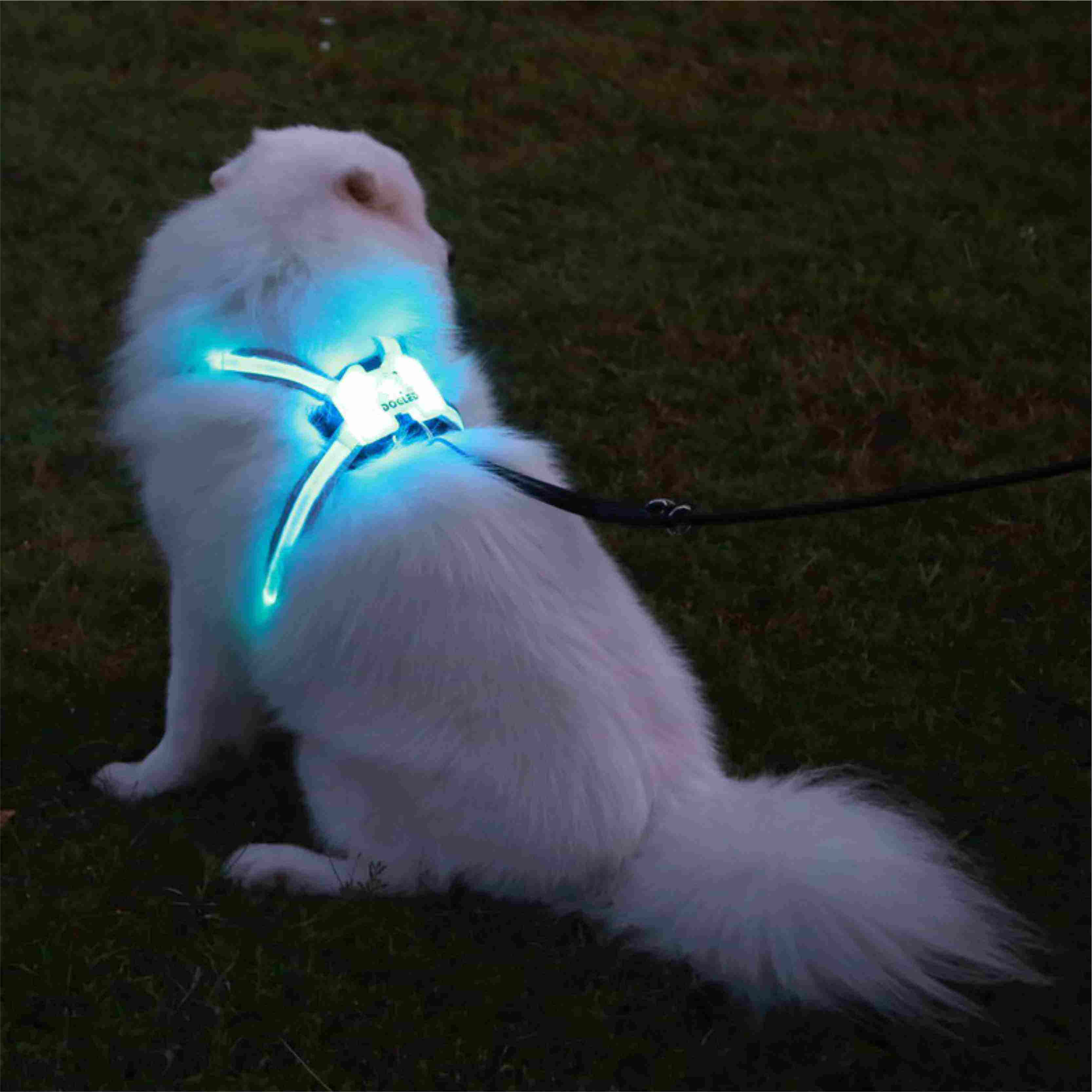 Professional manufacture adjustable pet led dog harness New 2020Favorites LED Pet Dog Cat Harness and Leash Leads Training Safe