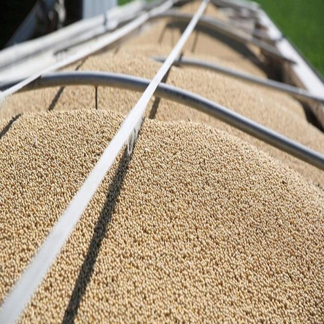 GMO and Non GMO Soyabean/Soybean for Sale