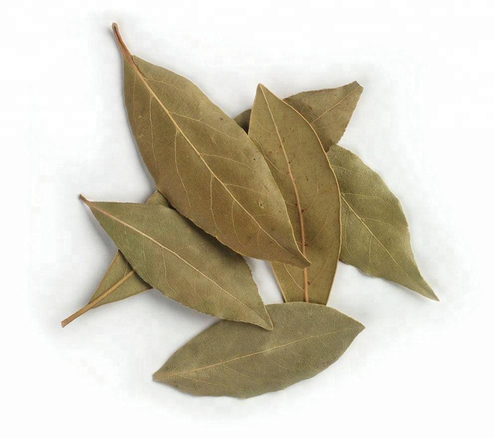 전통적인 인도 가시 여지 Graviola <span class=keywords><strong>잎</strong></span> 대 한 암 Treatment