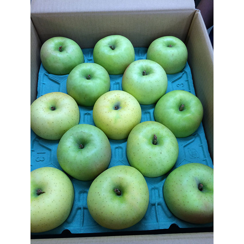 Apple style fresh fruits and fresh green color red delicious apple/Gala Apples For Sale