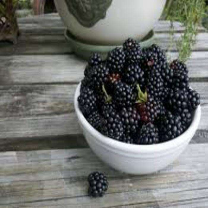 Stroberi Segar Kelas A, Raspberries Beri, Elderberry, Cranberries, Blueberry, <span class=keywords><strong>BlackBerry</strong></span>, Blackcurcurcurrant,